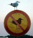 фото ЗакС политика <b>Сплошное муниципальное противоречие</b>