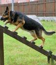 фото ЗакС политика Жители МО Дачное требуют площадку для собак