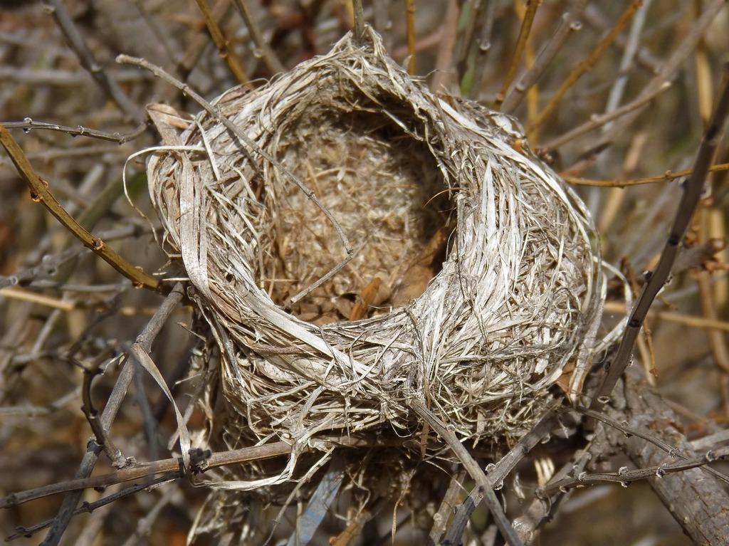 фото ЗакС политика Жители МО Звездное не рады вырубке деревьев с птичьими гнездами