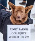 фото ЗакС политика В Красненькой речке поддержали идею ужесточения наказания за жестокое обращение к животным